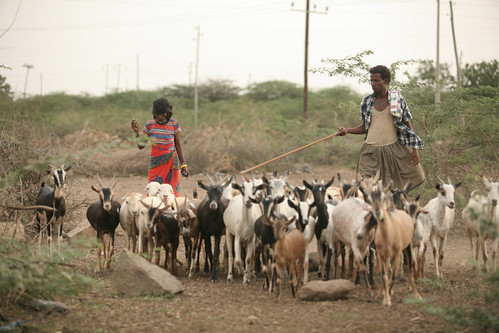 FAO Projects in Afar, Ethiopia