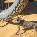 How to climb wheel spokes (1/3)