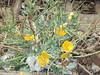 079 (en-ri) Tags: fiorellini little flowers giallo sony sonysti