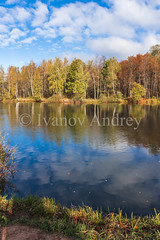 Autumn pond (Ivanov Andrey) Tags: autumn lake october pond water reflection rural forest beach wood birch maple ash leaf yellow gold nature trunk bark grass bush sky cloud blue skyblue white morning light explore grove journey landscape moss tranquility relaxation shadow sun tourism wild wind russia ngc