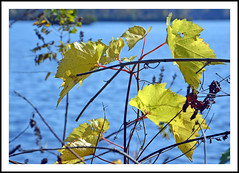Autumn Color at North Bay Park - Ypsilanti, Michigan (sjb4photos) Tags: michigan ypsilanti washtenawcounty fordlake northbaypark autumn