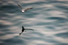 gaviota (p_a_m_zgz) Tags: gaviota sombra mar puerto