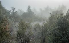 7.11.16 101 (Jeaunse23) Tags: mist fog france ardeche autumn gr ricohgrd grd