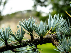 Spiky (allybeag) Tags: workington millfield workingtonhall prickles