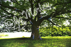 Tree Climbing (Jo_Morley) Tags: tree surreal surrealism sunny sun green outdoor climbing climb tiny multiple man male photography nature plant watermark interesting photoshop sony fun humour humor humorous experiment experiments rivington england uk funny unitedkingdom