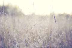 Meet me at sunset (Hello Little Wing) Tags: nature field tones softtones sunset grass wideaperture canon canongirl