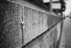 Stuck (Henrik J Kugelfest) Tags: m8 bw sverige leica monochrome blackandwhite street leicam8 bokeh summicron35type4 stockholm silverefexpro wideopen lightroom kingofbokeh