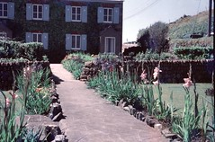 img096 (foundin_a_attic) Tags: 1964 cornwall red flowers garden green house stone wall path shuttering dimonds ivy blue