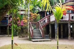 Home sweet home (Rafio Islam) Tags: home house building plant green khashia sylhet jaflong khashiapolli