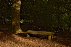 Bench (elhawk) Tags: autumn bench