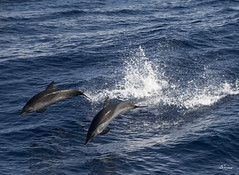 Wave Riders (DMac Photography) Tags: uncruise hawaii molokai maui lahaina kona