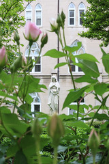 Virga Iesse Floruit (Lawrence OP) Tags: cloister roses bud immaculateconception blessedvirginmary ourlady washingtondc dominicanhouseofstudies