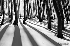 Luci e Ombre (itzel1984) Tags: terminillo rieti alberi neve luci ombre diagonali inverno winter passeggiata sulla