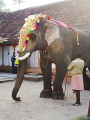 Temple Elephant (Shrimaitreya) Tags: elephant temple hindu hinduism india incredibleindia indians colors ganesha ganapati decoration
