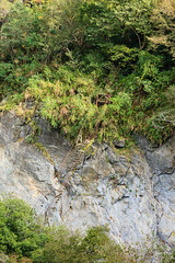 Taiwan-121116-757 (Kelly Cheng) Tags: asia northeastasia taiwan tarokogorge tarokonationalpark color colorful colour colourful day daylight green landscape nopeople nobody outdoor rock tourism travel traveldestinations vertical vivid