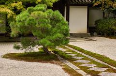 The diamond path of Tenju-an (Tim Ravenscroft) Tags: path moss tenjuan nanzenji kyoto japan garden zen
