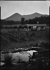 New Moon - Aug 2016 (Thodoris Tzalavras) Tags: photography cyprus landscape newmoon bw blackandwhite xrayfilm 13x18 sironarn210mm vineyard rodinal cy
