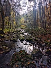 Hönnetal creek, moss and light III