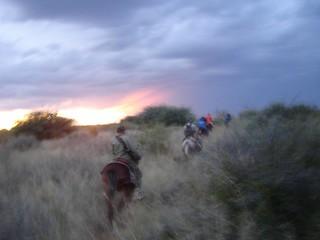 Namibia Plainsgame Hunt - Kalahari Desert 26