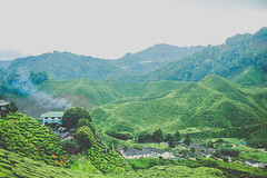 DSCF1130 (tzeyangtan) Tags: cameron highlands getaway green sgpalas tea plantation photography