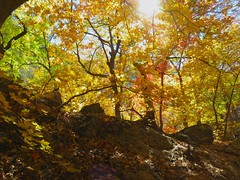 Fall Color at the Grotto, Guadalupe Mtns.  N.P. (knutsonrick) Tags: park nationalpark hiking dayhiking thegrotto fall fallcolors parks mckittrickcanyon mckittrickcanyontrail guadalupemountains guadalupemountainsnationalpark westtexas texas carlsbadnm vanhorn vanhorntexas