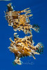 IMG_9703 (nealmoc) Tags: bigisland hawaii kona underwater pelagic whoa dorkbutts canon wideangle tokina nauticam