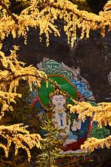 Buddha (Mel s away) Tags: daocheng sichuan china    buddha color colorful zen chanmelmel mel melinda melindachan yading larch tree golden pine plant mani stone