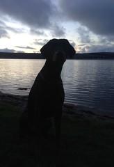 Gunner (Dls Bute) Tags: water sunset male dobbie sit shadow nightsky night dog dobermann doberman gunner