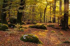 In the wood (Un ragazzo chiamato Bi) Tags: soriano faggeta autunno autumn sunset trees leafs bosco sony a7 zuiko om 50mm f12 backlight