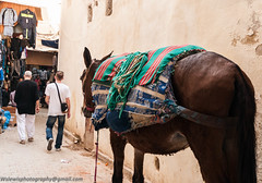 _DSC2966.jpg (wslewis73) Tags: morocco travel photography nikon colours smells culture detail sharp contrast old hot
