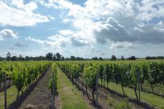 Woi (KalleKrabowsky) Tags: wein reben wingert weinberg rheinhessen clouds wineyard