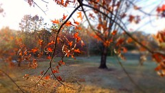 I'm still here (GrisParr) Tags: tennessee usa fall blur leaf branch tree sunny northamerica nature scenic autum