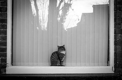 2016_339 (explored) (Chilanga Cement) Tags: fuji fujix100t fujixt1 x100t xseries x100s x100 x bw blackandwhite monochrome cat window reflection reflections reflecting reflective kitty pussy feline moggy
