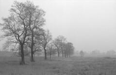 0031tmax400-praktica-oreston-hydrofen-norm (Moryc Welt) Tags: kodaktmax400 asa400 trees fog hydrofen n10 w17 oreston50 praktical epsonv600 diy homemadesoup katowice poland silesia podlesie europe gimp iscanforlinux
