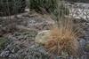Erster Frost - 0034_Web (berni.radke) Tags: ersterfrost frost raureif wassertropfen rime eisblumen eiskristalle iceflowers icecrystals escarcha