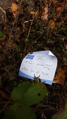 Lost party (Jacob Whittaker) Tags: lost dropped thrown discarded found