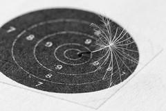 Natural arrow (♪ jjuke44 ♫) Tags: arrow flêche dandelion macro macromondays