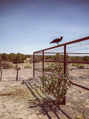 Galisteo Basin Preserve, NM (GFFPhoto) Tags: newmexico santafe 14mm