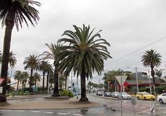 St Kilda Roundabout (Seb Ian) Tags: road street trees tree traffic taxi roundabout tram australia melbourne victoria mcdonalds palmtrees palmtree intersection lunapark streetscape stkilda