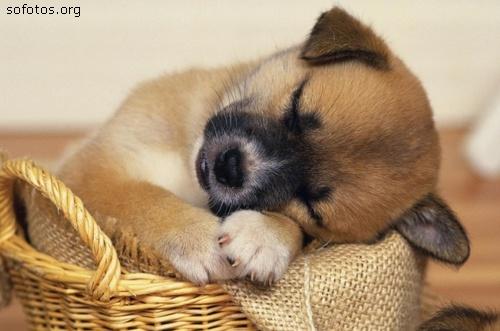 Filhotes de cachorros 27