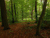 Through the Trees (Siren Echo) Tags: berlin nature forest germany woods mounteerie