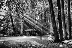 Morgens im Wildpark