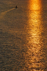 before the great rain (Scilla sinensis) Tags: summer sun rain golden minne rowing wilhelmshaven fotosondag fs130908