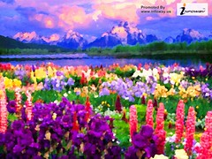 field of flowers (Infoway LLC - Website Development Company) Tags: wallpaper nature beautiful wonderful nice superb awesome images exotic hd incredible breathtaking oilpainting classy mindblowing fieldofflowers softwaredevelopmentcompany ecommercewebdevelopment amaizingplace