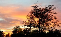 Sunset In Austin Supermarket Car Park - Austin Texas (Gilli8888) Tags: austin texas sunset carpark sky trees silhouette usa tx supermarket