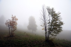 Alberi nella nebbia (Guido Andolfato) Tags: nebbia albero autunno montegrappa nikond300 montepalon vrzoom1685mmf3556gifed