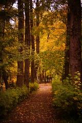 Park Alley (Sergei P. Zubkov) Tags: park autumn october terijoki 2013