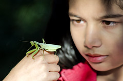 Observation ! (Commoner28th) Tags: pakistan insect observation child experiment prayingmantis