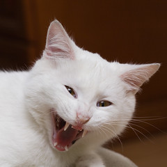 Baron (ajobkiewicz) Tags: animals kat koty