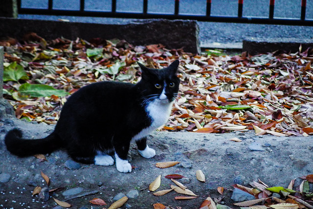 Today's Cat@2013-12-15